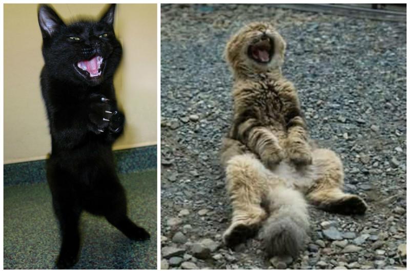 Смеяться над хорошей шуткой коты, милота, поведение, счастье, эмоции