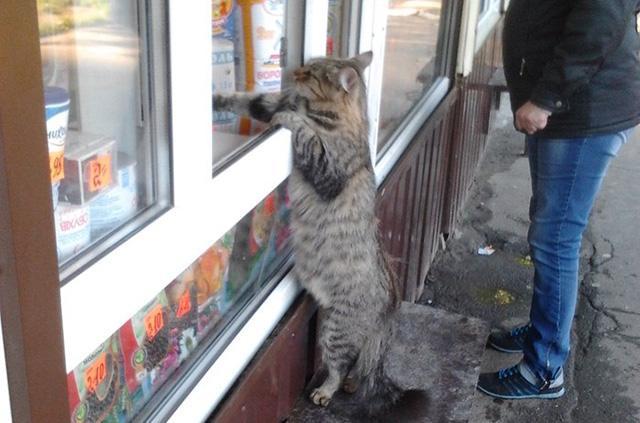 Похоже, эти паршивцы над нами издеваются — забавные истории о смекалистых котиках