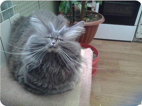 Сушите кота правильно!