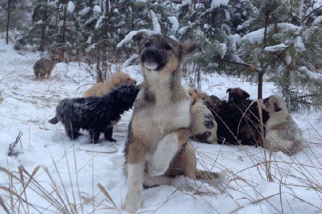 Кто-то плакал в чаще глухого рязанского леса… Это 20 выброшенных щенков молили о помощи