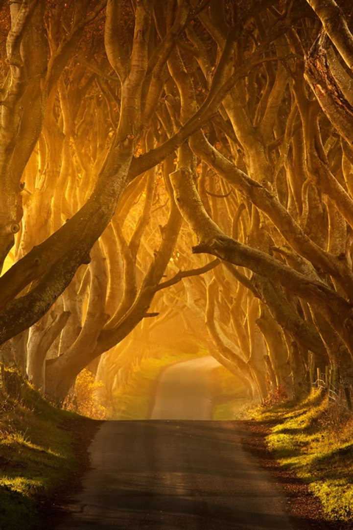 Mysterious trees in Ireland - 2