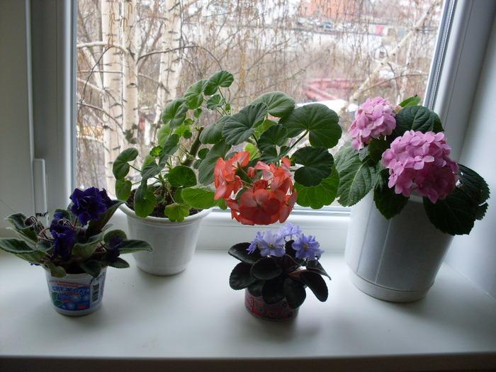 На подоконнике цветок