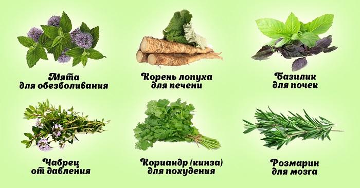 полезные травы и растения