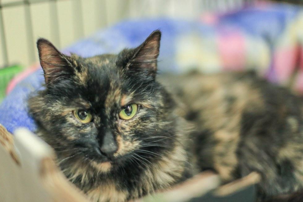 История о кошке, которая хотела спасти жизнь новорожденному котенку