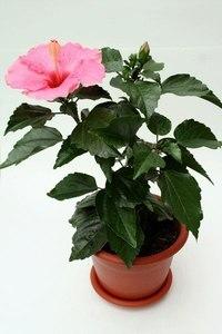 5 полезных растений для вашего дома.
