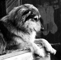 Нужна помощь: животные в беде