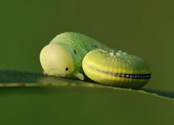 Красивые макро-фотографии насекомых