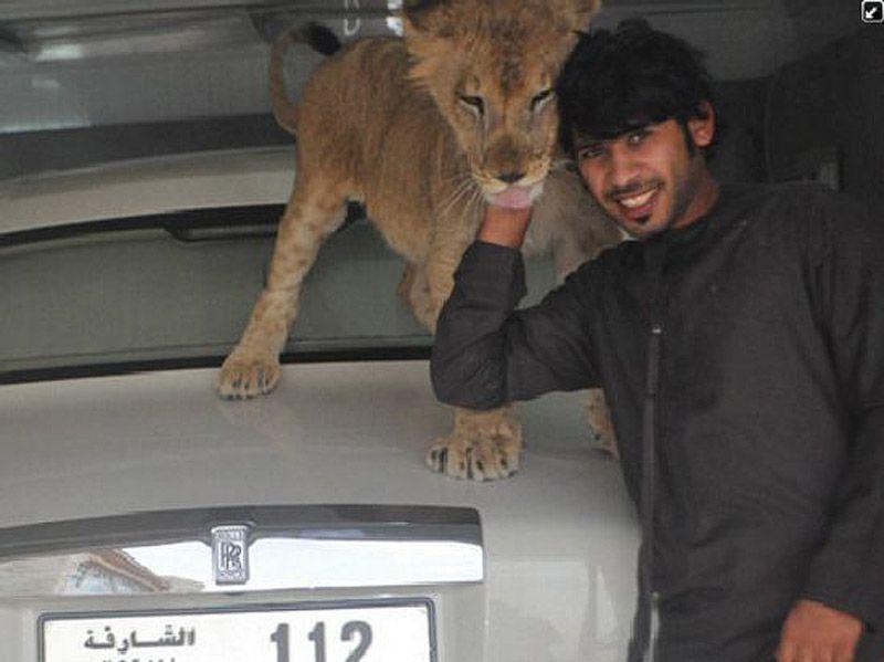 catsncars21 Хищные кошечки и дорогие машины: досуг арабского миллионера