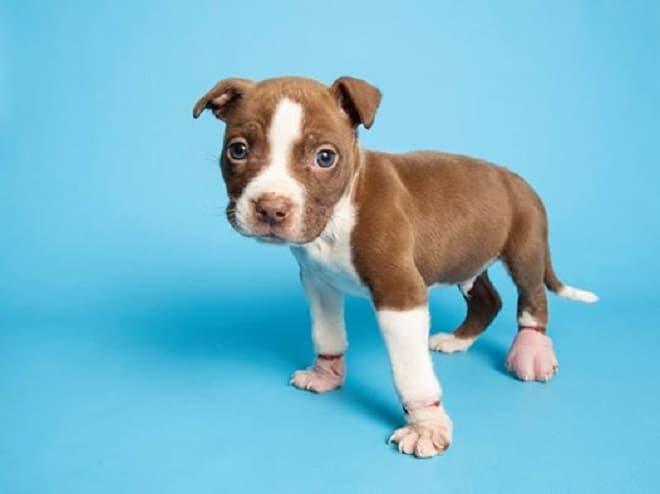 «Он не мог стоять, а тихо «плакал»: щенка нашли с распухшими лапками