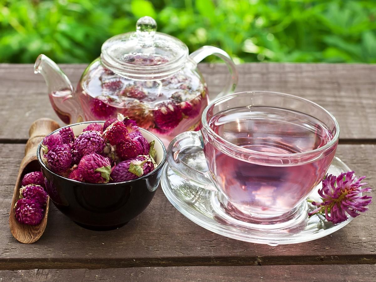 Не спешите ссориться – пейте чай из клевера