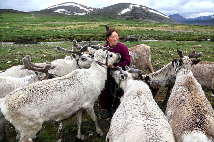 Женщина-кочевник в окружении северных оленей.