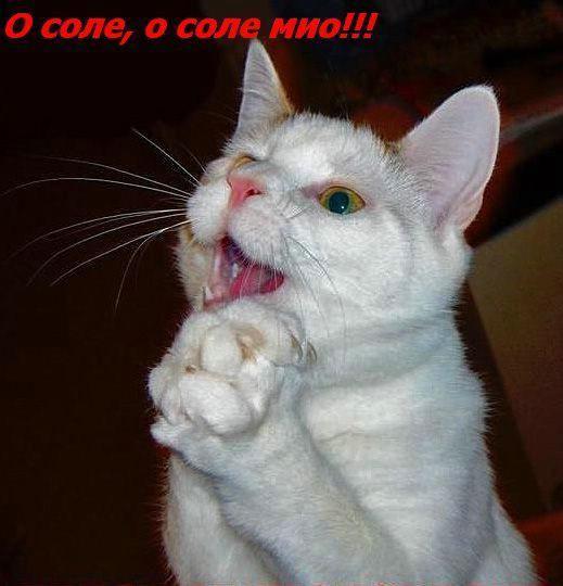 Жизнь кошачья :) (39 фото)