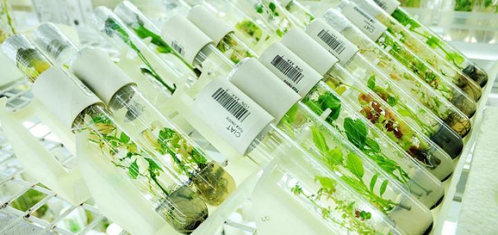 ГМО и политика раскачки ситу…