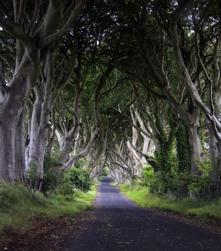 Mysterious trees in Ireland - 3