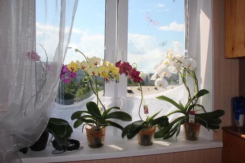 Орхидея может навредить!