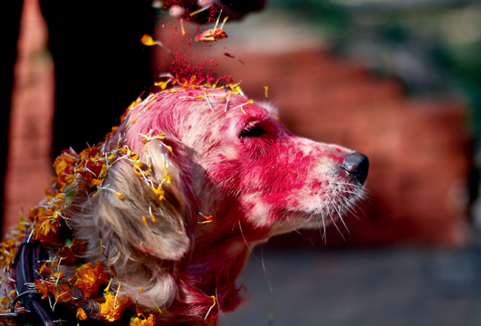 В Непале считается, что собаки умеют разговаривать с богом смерти Йамой.