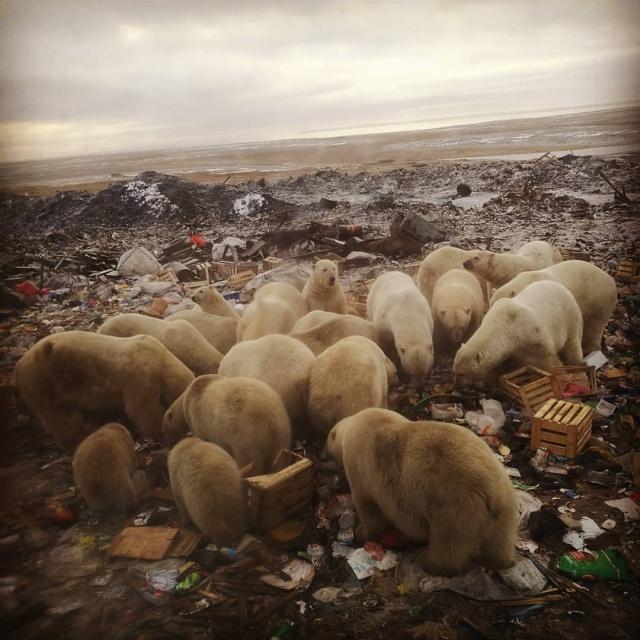 Эти фотографии шокировали Европу — нашествие медведей (10 фото)