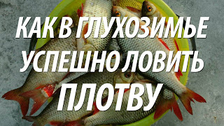 Ловля плотвы зимой в глухозимье - советы рыбакам