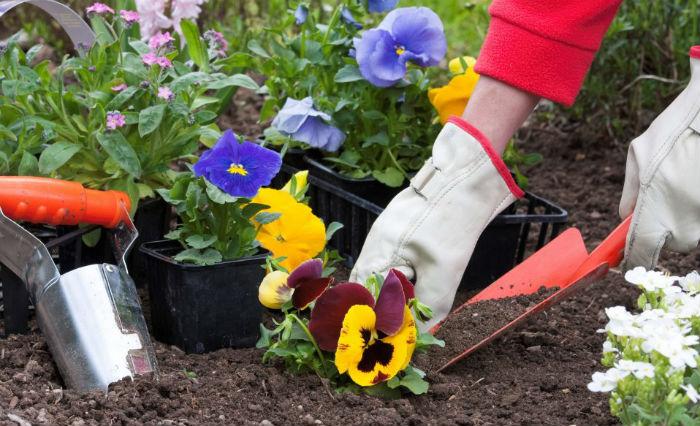 Когда сажать цветы семенами под зиму 239