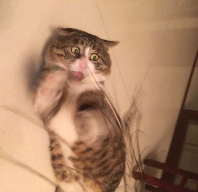 Найден эмоциональный кот, достойный звания «король драмы»!