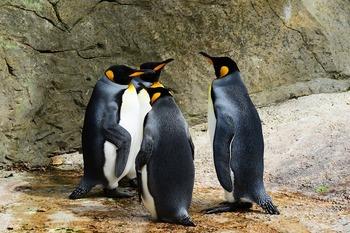 Палеонтологи были шокированы, обнаружив останки гигантского древнего пингвина