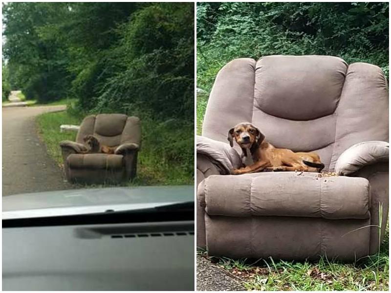 Брошенный на дороге пес до последнего верил, что хозяин вернется