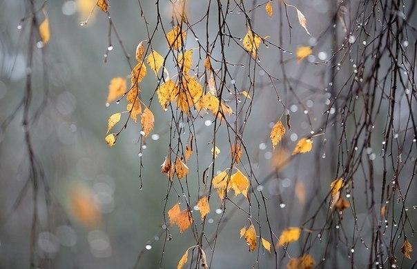 Сегодня я дарю тебе позднюю осень