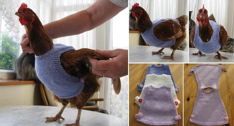 Как сделать куриный свитер