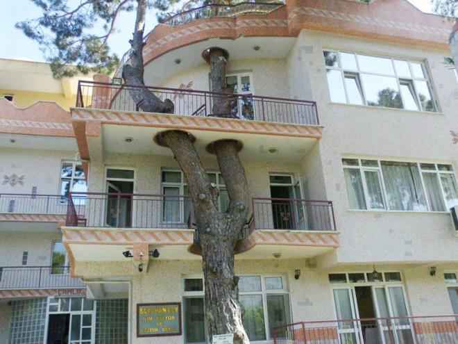 11 современных зданий, при строительстве которых отказались от вырубки деревьев