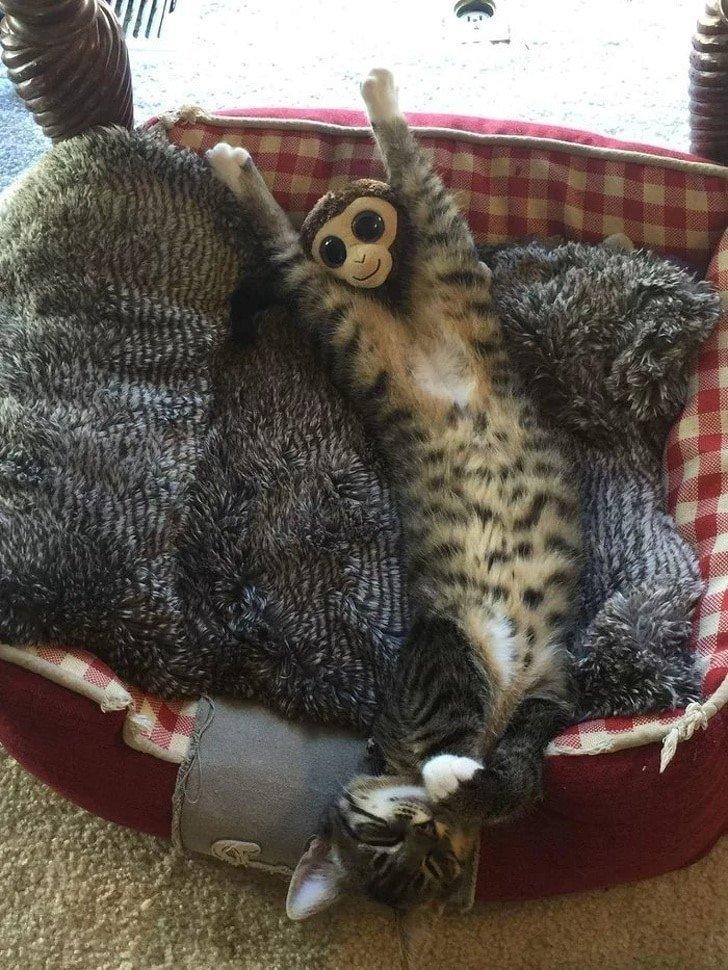 Забавные снимки с котами, где не сразу понятно что происходит