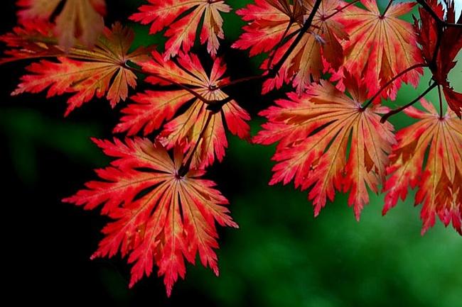 Осенний карнавал в вашем саду