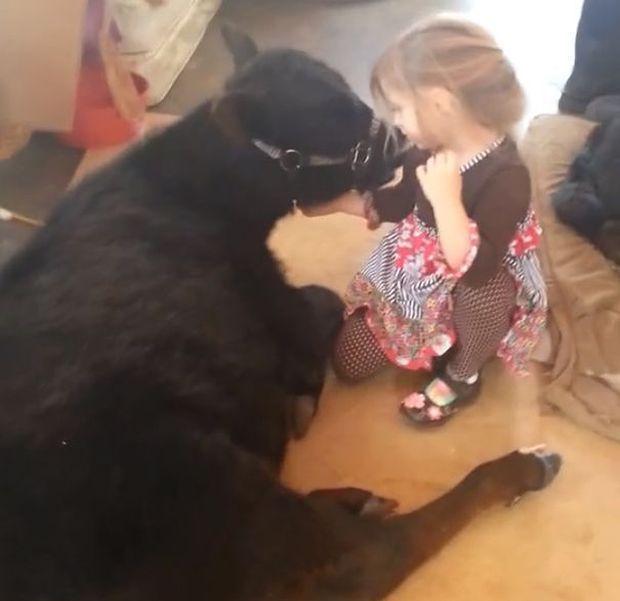 девочка привела домой теленка, теленок в доме