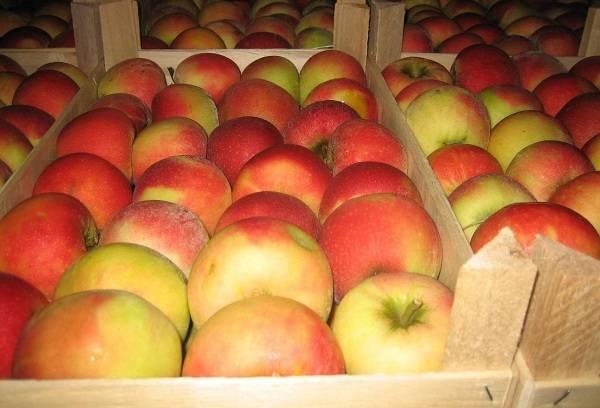 красные яблоки в коробках