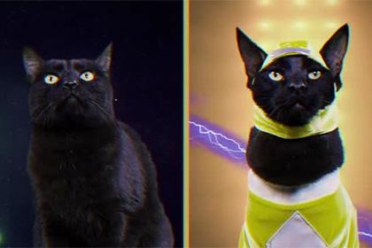 Коты «спародировали» сцену из сериала «Могучие рейнджеры»