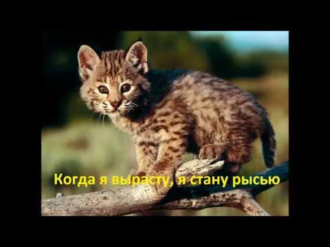 Когда я вырасту, я стану рысью. Рысенок ведет себя как обычный, маленький котенок.