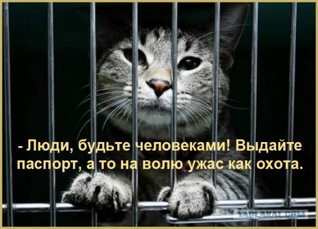 Краснодарцев обязали регистрировать котов и собак. Котику без паспорта теперь и погулять нельзя?