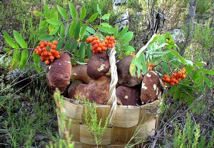 осенние грибы фото - 19
