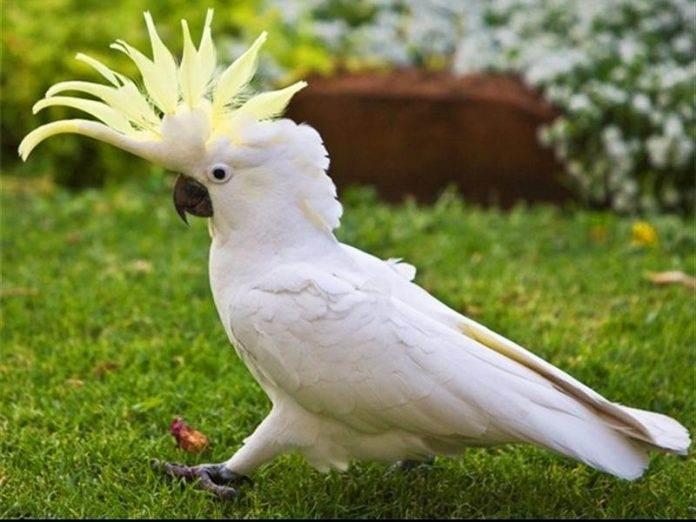 Такого словарного запаса от попугая точно не ожидали!