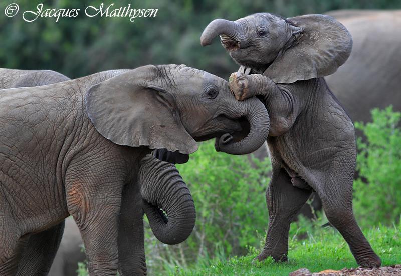 Boppy Newborn Lounger Elephant Love Gray  Baby  amazoncom