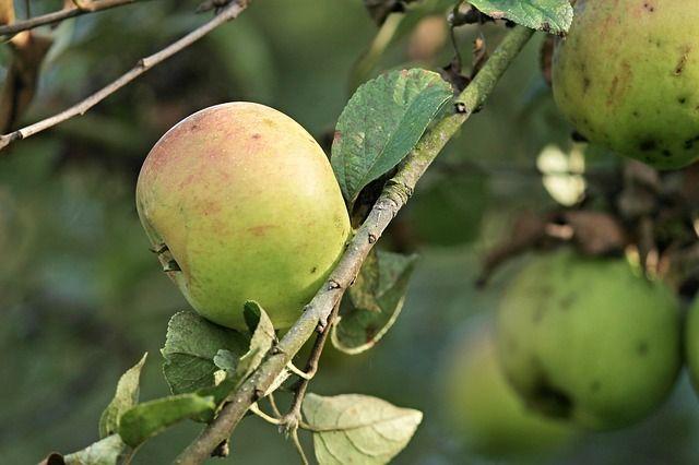 Стоит ли сажать деревья на даче осенью и какие выбрать?