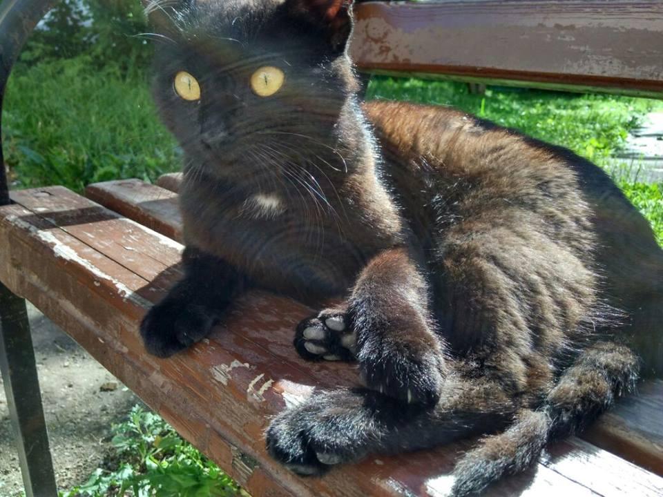 Раненый молодой котик. Срочно нужен дом. Москва.