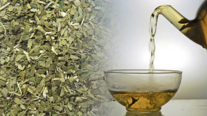 Чем полезен чай мате?