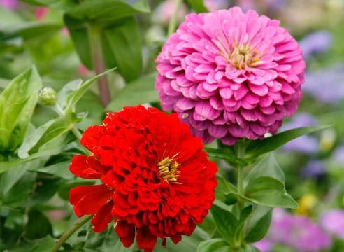 Цветы перед зимовкой: несколько полезных советов