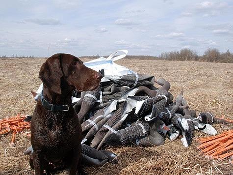 Весеннюю охоту на гусей надо запрещать