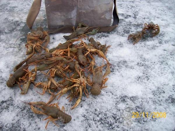 сезон ловли раков во  казахстане