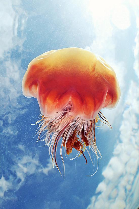 Завораживающие фотографии медуз от Александра Семёнова