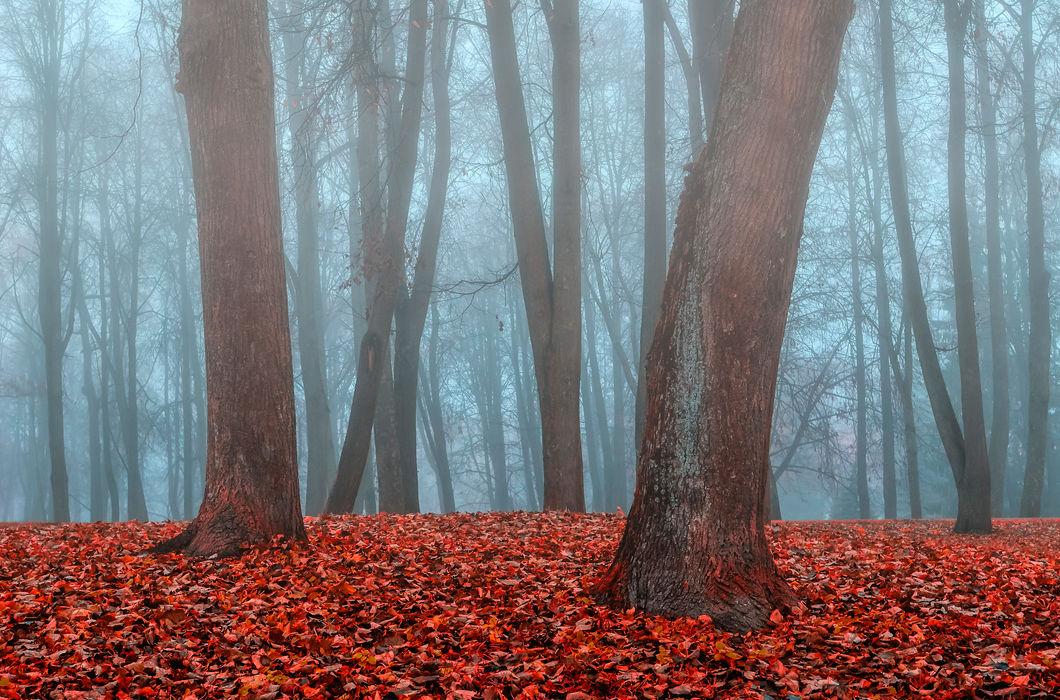 Осень: лучшие фотографии со всего мира
