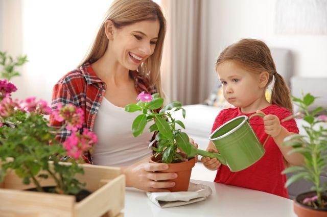 Почему весной желтеют листья и цветы у комнатных растений