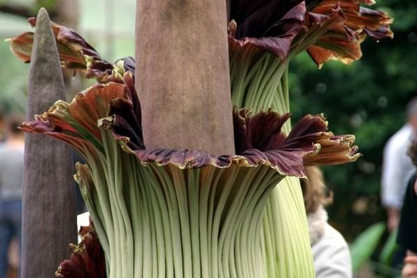 самые редкие цветы мира