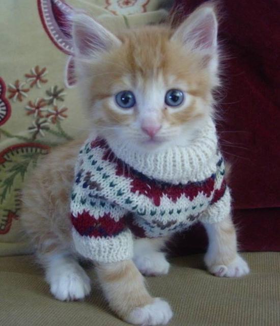 Когда на улице жуткий мороз животные, интересные, одежда